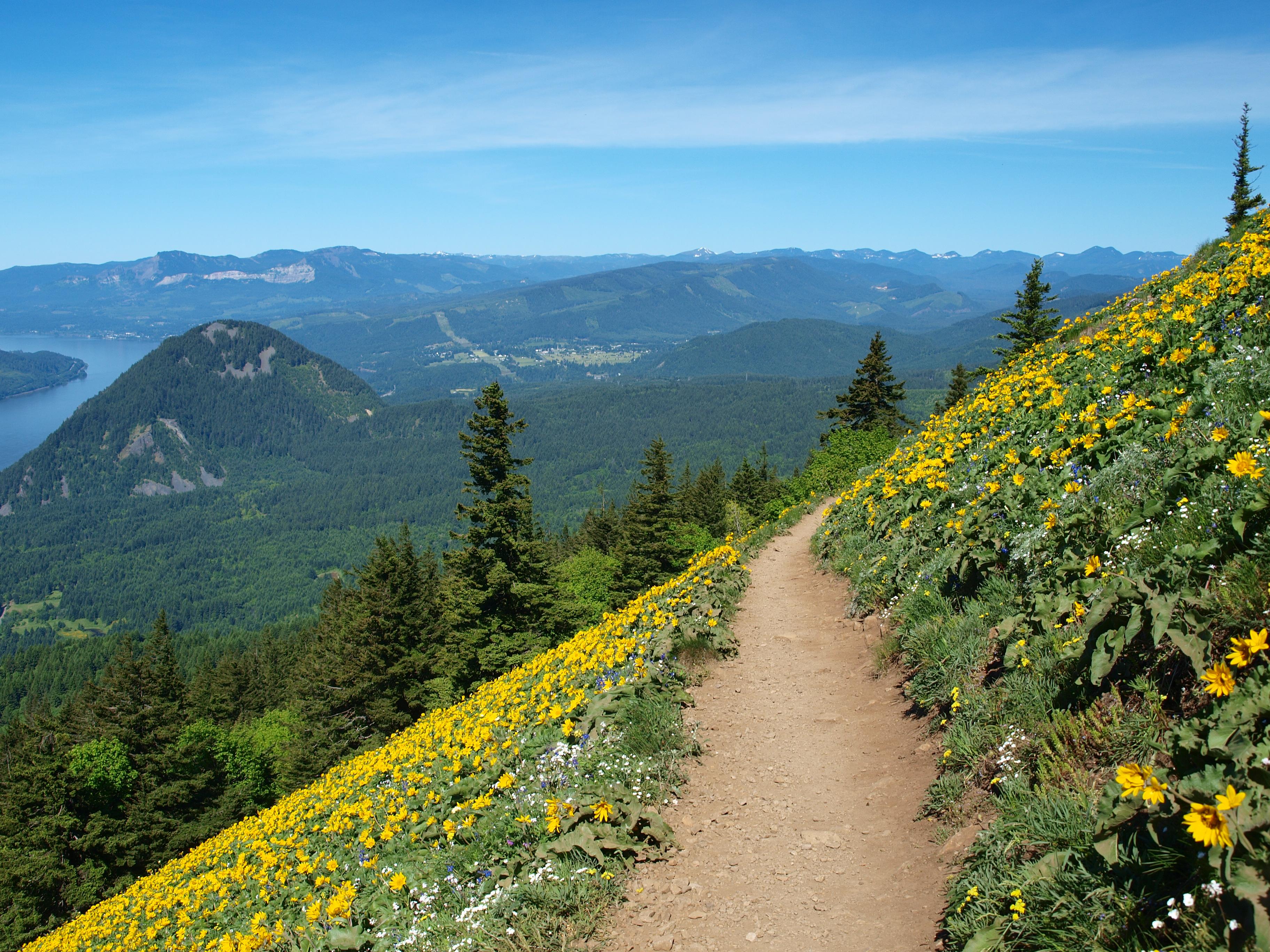 Dog Mountain Hike Reviews