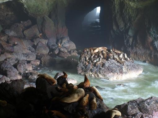 Sea Lion Caves Adam Sawyer