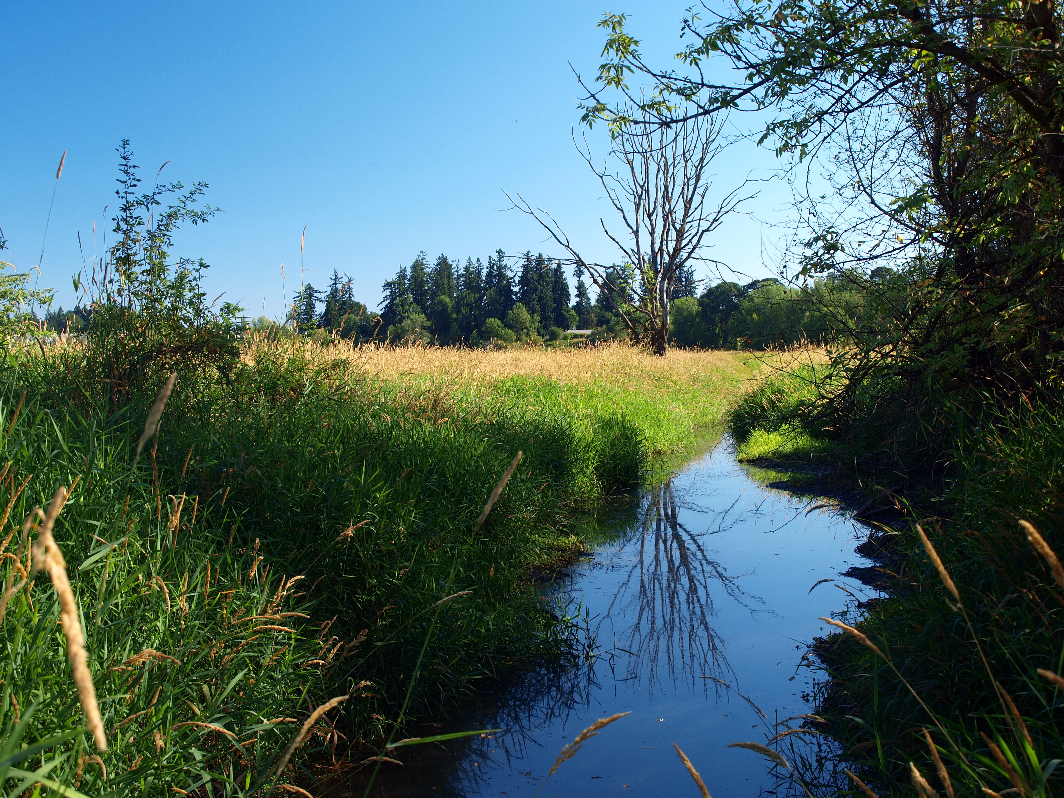 An essay on preservation of wetlands